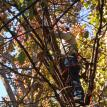 OUR DEDICATED TREE TRIM SPECIALIST WILL CLIMB HIGH TO HELP YOU!